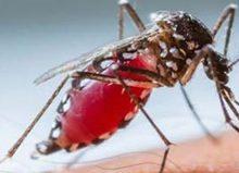 Rio Claro tem 92 casos  registrados de dengue.