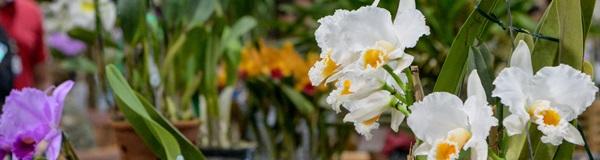Exposição de Orquídeas.